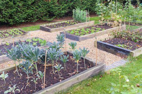 5 savjeta za planiranje vrta